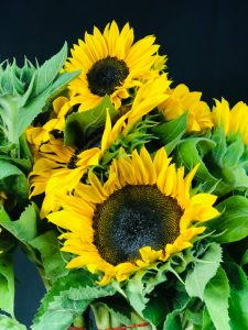 Premium Sunflowers