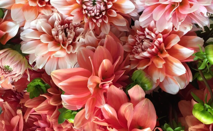 pink-flowers-banner