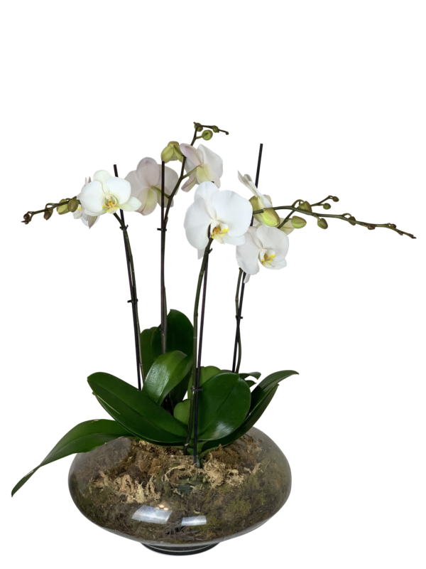 Christmas Flowers Orchids