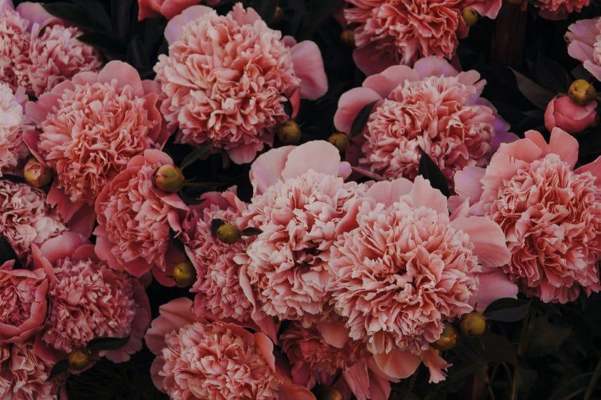 Florist Melbourne