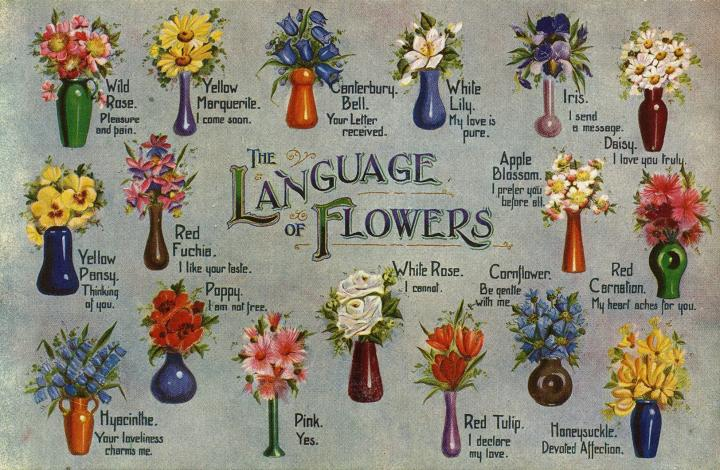 flower meanings infographic